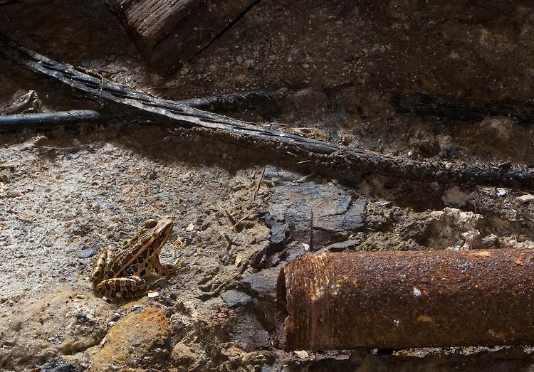 Leopard frog in asylum basement