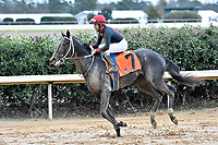 HOT SPRINGS, AR - FEBRUARY 19: Retirement Fund with jockey Shaun Bridgmohan cooling down after the Southwest Stakes at Oaklawn Park on February 19, 2018 in Hot Springs, Arkansas. (Photo by Ted McClenning/Eclipse Sportswire/Getty Images)