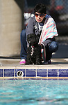 Henry watches the action at the 10th annual Pooch Plunge at the Carson City Aquatics Center, in Carson City, Nev., on Saturday, Sept. 22, 2018. The event is a fundraiser for the Carson Animal Services Initiative which supports Nevada Humane Society services in Carson City.<br /> Photo by Cathleen Allison/Nevada Momentum