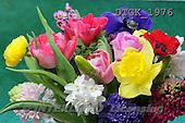 Gisela, FLOWERS, photos+++++,DTGK1976,#f#