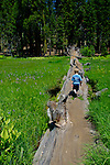 Young boy walking on fallen tree whike hiking at Crescent Meadow in summer, Sequoia National Park, California
