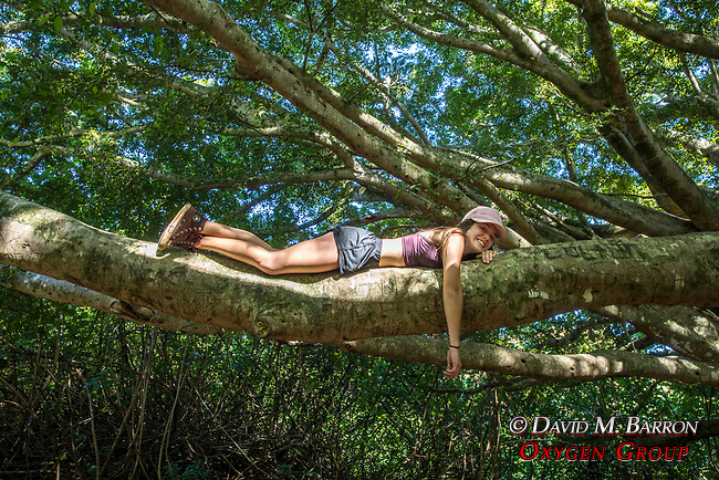 Young Woman In Banyon Tree, Ohe'o Gulch