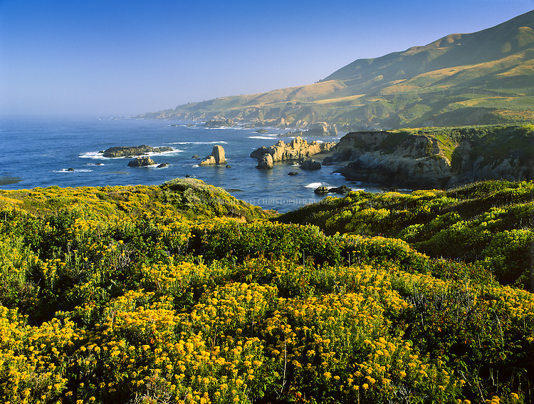 Spring wildflowers carpet the slopes of Soberanes Point at Garrapata State Park, 3,000 acres (1,214ha), along Highway 1 and California's Big Sur Coast. Park has two miles of beach front, coastal hiking and a 50-foot climb to a beautiful view of the Pacific. Monterey County, CA.