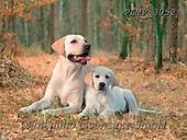 Marek, ANIMALS, REALISTISCHE TIERE, ANIMALES REALISTICOS, dogs, photos+++++,PLMP3052,#a#, EVERYDAY