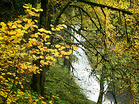 Middle North Falls and fall color.Silver Falls State Park, Oregon