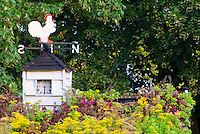 Barn rooftop garden, living roof, with sempervivums and sedum succulent plants on top of shed barn with steeple clock and chicken rooster bird weathervane