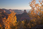 Aspens (Populus tremuloides) and Mount Hayden as viewed from the Ken Patrick Trail on the North Rim of the Grand Canyon National Park, Arizona, USA