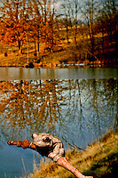 Tree frog, Hyla versicolor, perches on a branch overlooking a fall lake, Mssouri USA