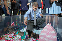 Representative Mike Quigley, Democrat of Illinois, plays with kittens in the Rayburn House Office Building on Capitol Hill in Washington, DC during an event in support of the 'Kitten Act' which aims to stop testing by the United States Department of Agriculture on Kittens in Washington, DC on June 7, 2018. <br /> CAP/MPI/RS<br /> &copy;RS/MPI/Capital Pictures