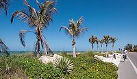 Morning run on Captiva Island, Florida, USA. Photo by Debi PIttman Wilkey