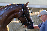 LOUISVILLE, KY -JUN 04: Kentucky Derby and Preakness winner Justify after his final work at Churchill Downs, Louisville, Kentucky, in preparation for the June 9 Belmont Stakes in New York. (Photo by Mary M. Meek/Eclipse Sportswire/Getty Images)