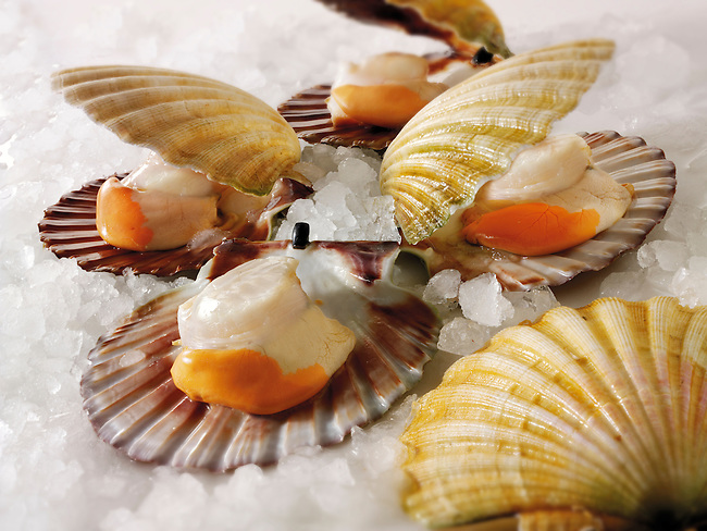 Fresh Scallops, stock photos