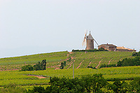 wind mill vineyard moulin a vent beaujolais burgundy france