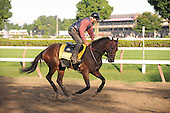 Kentucky Derby winner Mine That Bird jobs over the main track