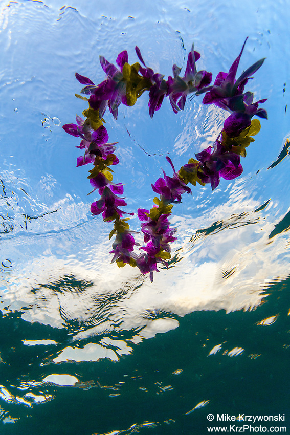 Underwater view of colorful heart shaped Hawaiian flower lei floating on water surface