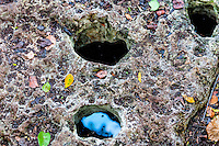 US, Florida, Everglades, Shark Valley. Limestone solution holes at Otter Cave Hammock Trail.