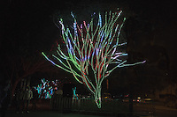 Sydney Vivid, Philips Tree