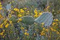 Stock Photo of Arizona USA