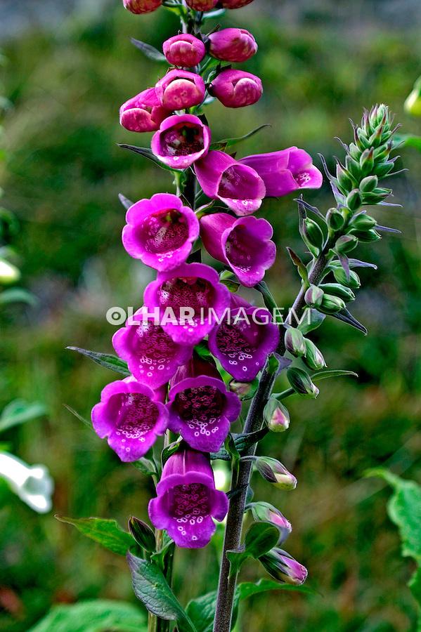 Flores no Parque Nacional Torres del Paine. Chile. 2004. Foto de Maristela Colucci.