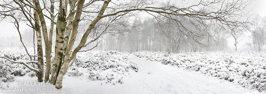 Winter scene with birch tree, Stanton Moor, Peak District National Park, Derbyshire. Digitally Stitched Panorama.