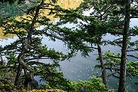 Trees, Deception Pass State Park, Washington