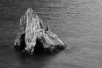Old stump in water