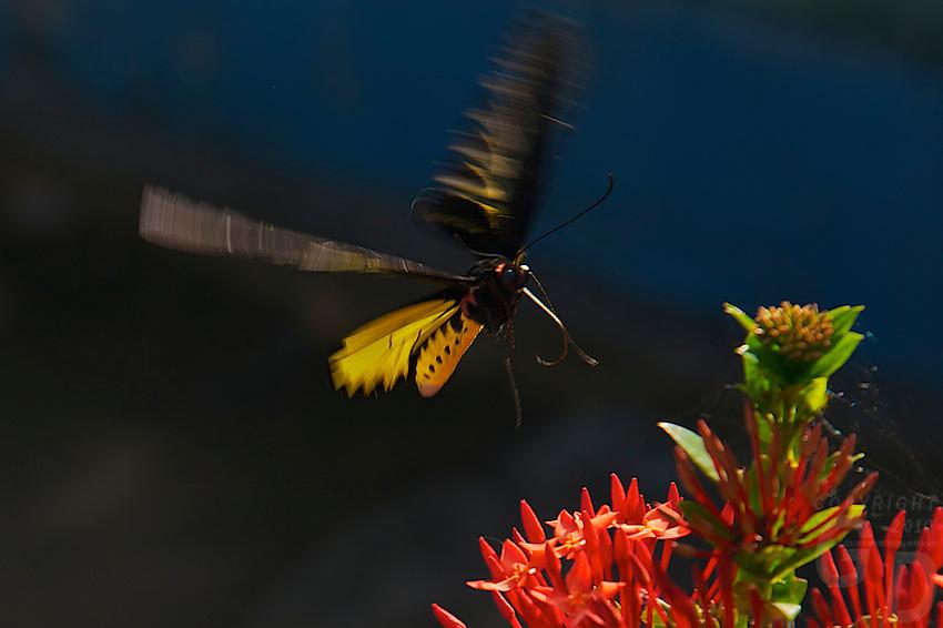 Colorful Butterfly at Phnom Ek Battambang, Cambodia