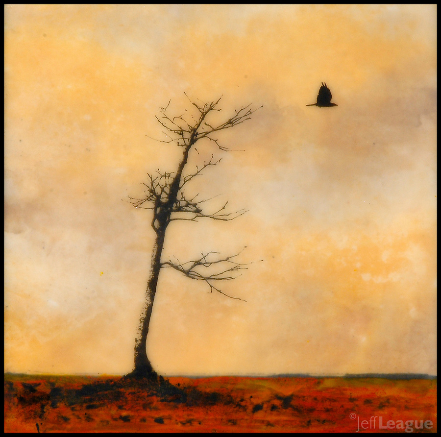 Mixed media art of bare tree with lone crow. encaustic painting with photography