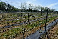 La Mare Wine Estate, Insel Jersey, Kanalinseln