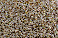 A picture dated November 10, 2005 shows a macro pictiure of white quinoa.  2013  was declared the international year of Quinoa by the UN.  Bolivia is the main producer of quinoa in the world.
