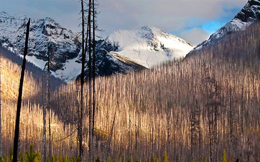 Forest burn at Kootenay Park, Alberta - Canada