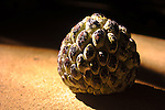 Brazilian sweetsop fruit, also called sugar apple