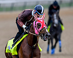 LOUISVILLE, KENTUCKY - APRIL 30: Master Fencer, trained by Koichi Tsunoda, exercises in preparation for the Kentucky Derby at Churchill Downs in Louisville, Kentucky on April 30, 2019. John Voorhees/Eclipse Sportswire/CSM