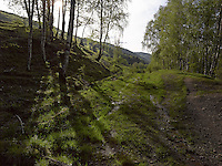 FOREST_LOCATION_90052
