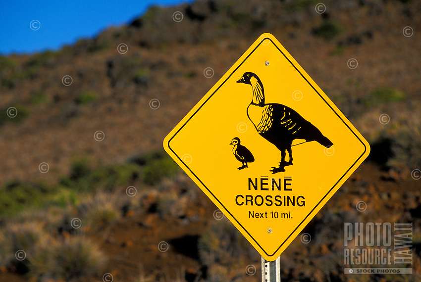 Cautionary Nene Crossing sign in Haleakala National Park on Maui. Nene are believed to be descendants of Canadian geese that were carried off course during migration in a storm to the Hawaiian Islands.