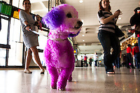 Pink and Purple Poodle at San Diego International Airport on Valentine's Day 2013