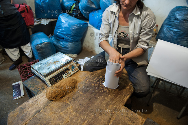 Albania - Luigj Simoni è un produttore di tabacco che lavora poco distante da Scutari, nel Nord dell'Albania. la lavorazione del tabacco che dopo la raccolta deve essere impachettato.