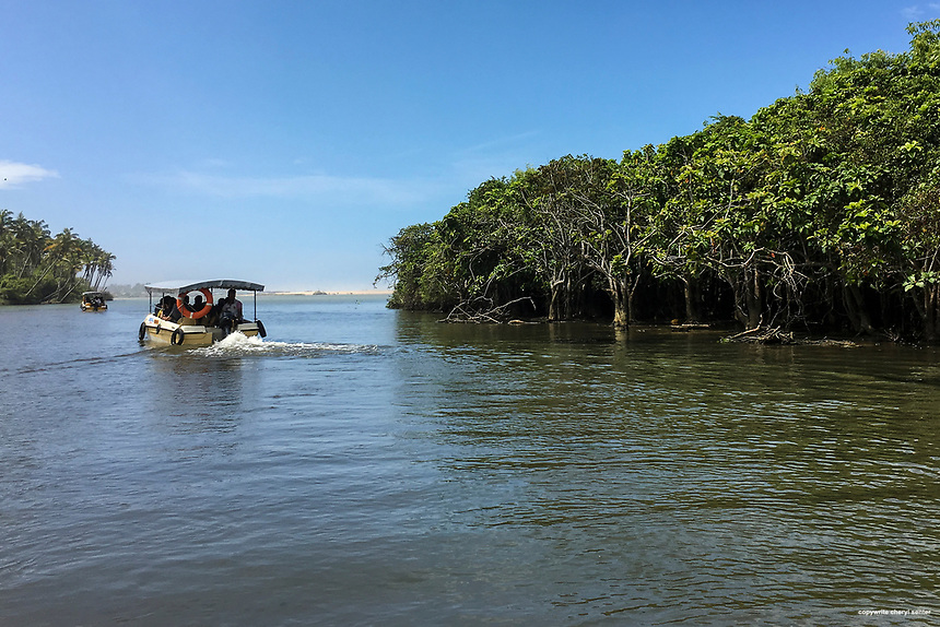 A boat ride on a brackish lagoon, lined by a mangrove forest and palms, leading to Poovar Golden Beach and the Indian Ocean in Trivandrum, Kerala, India  June 17, 2017 (Cellphone Photo by Cheryl Senter)