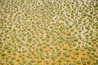Aerial of mangroves, Everglades National Park, Florida