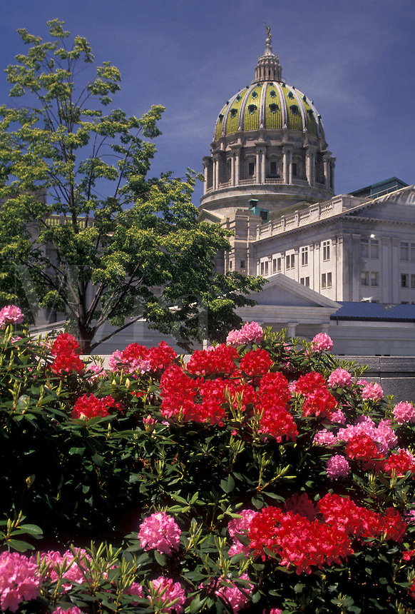 AJ4272, Harrisburg, State Capitol, State House, Pennsylvania, Red and pink rhododendron adorn the grounds of the State Capitol Building in the capital city of Harrisburg in the state of Pennsylvania.