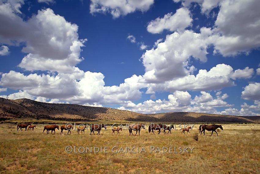 Wild Horses, on Route 66, Arizona