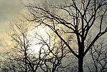 Low winter sun behind bare trees.