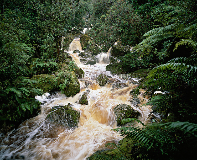 Black River. South Westland National Park. New Zealand.