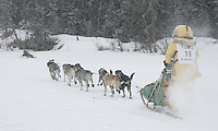 Saturday February 25, 2006 Willow, Alaska.  Ellen King runs down the trail on Willow Lake at the start day of the Junior Iditarod sled dog race.  Willow Lake.