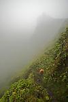descente dans la caldeira de la Montagne Pelée (1395 m).
