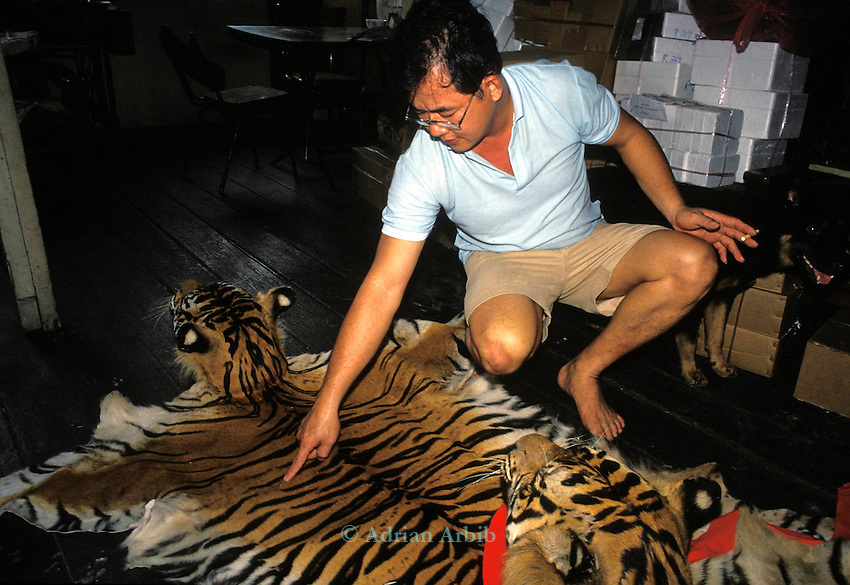 Sumatran Tiger skins in a Singapore skin  trader's shop.  ..This man claimed that he could supply 15 skins a month  which  effectively would wipe out the entire Sumatran Tiger population...The trader is pointing to the  hole which the poacher's bullet made in the tiger