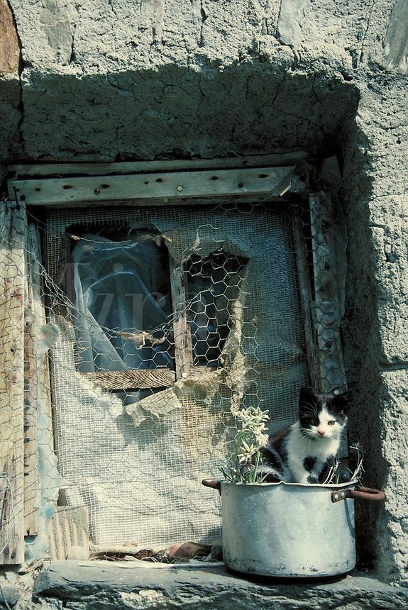 Kitten plays in window sill. Italian Alps Switzerland Europe.