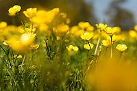 Springtime delights