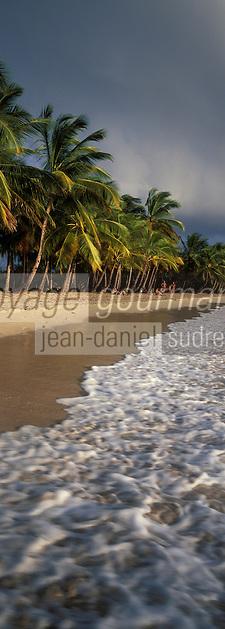 France/DOM/Martinique: Plage des Salines et cocotiers