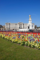 United Kingdom, England, London: Buckingham Palace and Queen Victoria Monument with Tulips | Grossbritannien, England, London: Buckingham Palace und Queen Victoria Monument